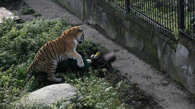 tigernut segíthet a fogyásban